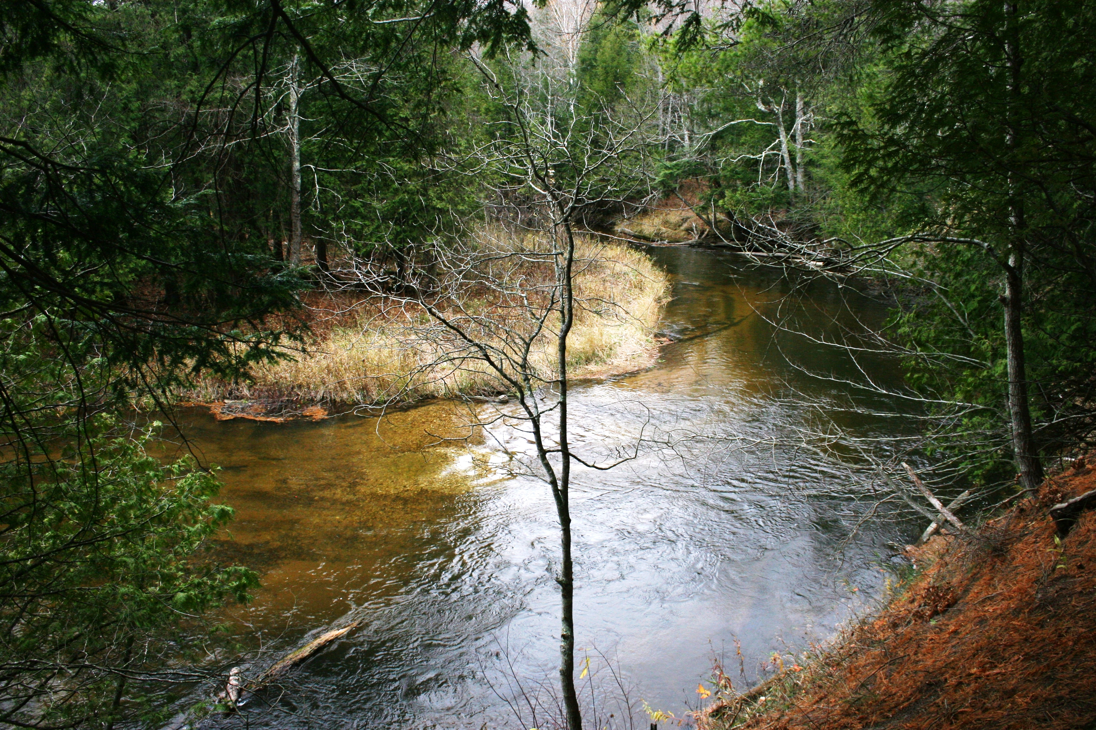 Misty acres the borwell preserve grand traverse for Betsie river fishing report